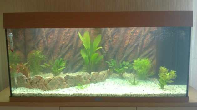 Aquarium ist eingerichtet