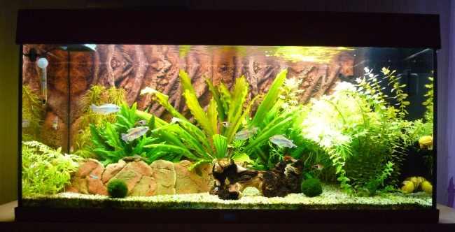 Aquarium im Dezember 2011