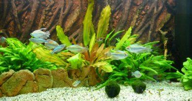Aquarium im Juli 2012