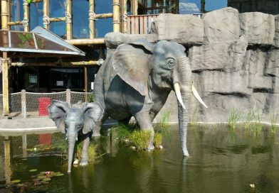 Dschungelland Elefant