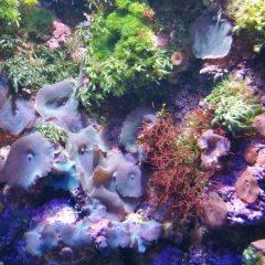 Meeresaquarium Fehmarn